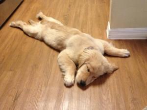 sleeping_puppy-1571